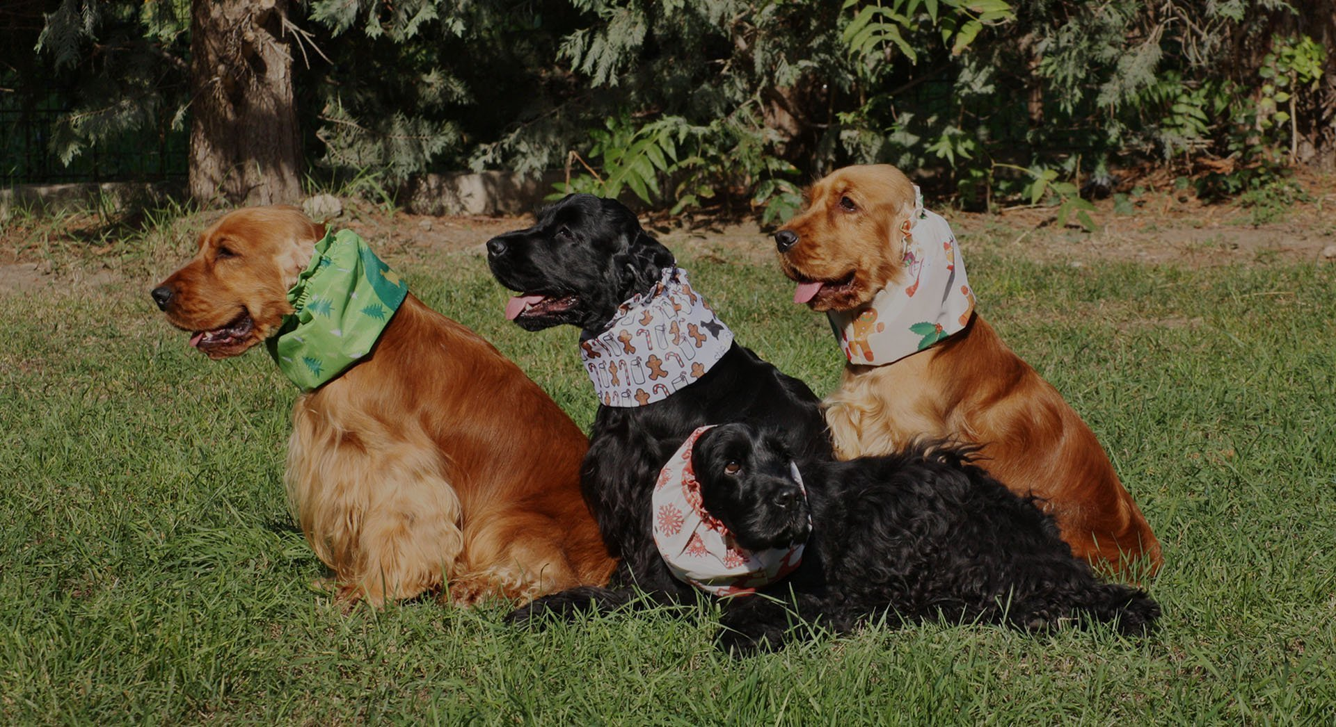Copriorecchie per cani