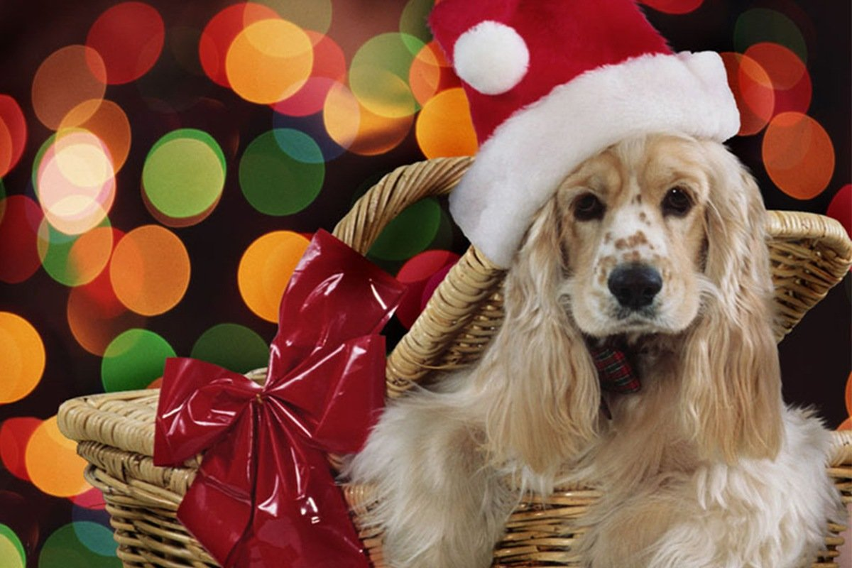 Immagini Cani Natale.5 Regali Per Cani Da Mettere Sotto L Albero