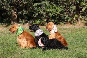 regali-per-cani-natale