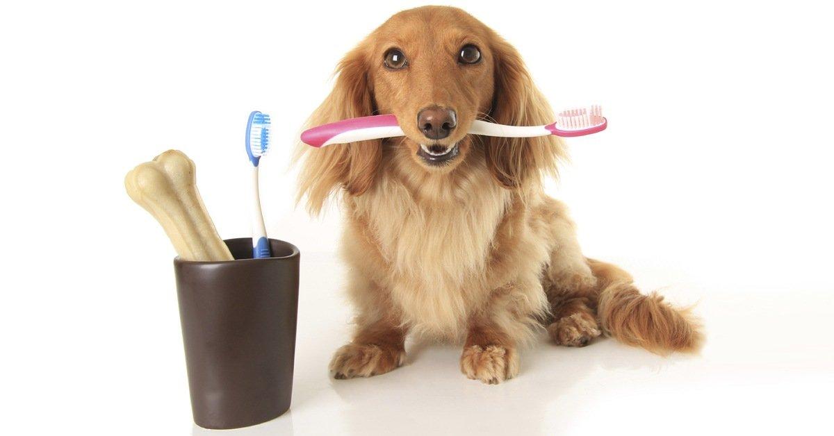 lavare denti al cane