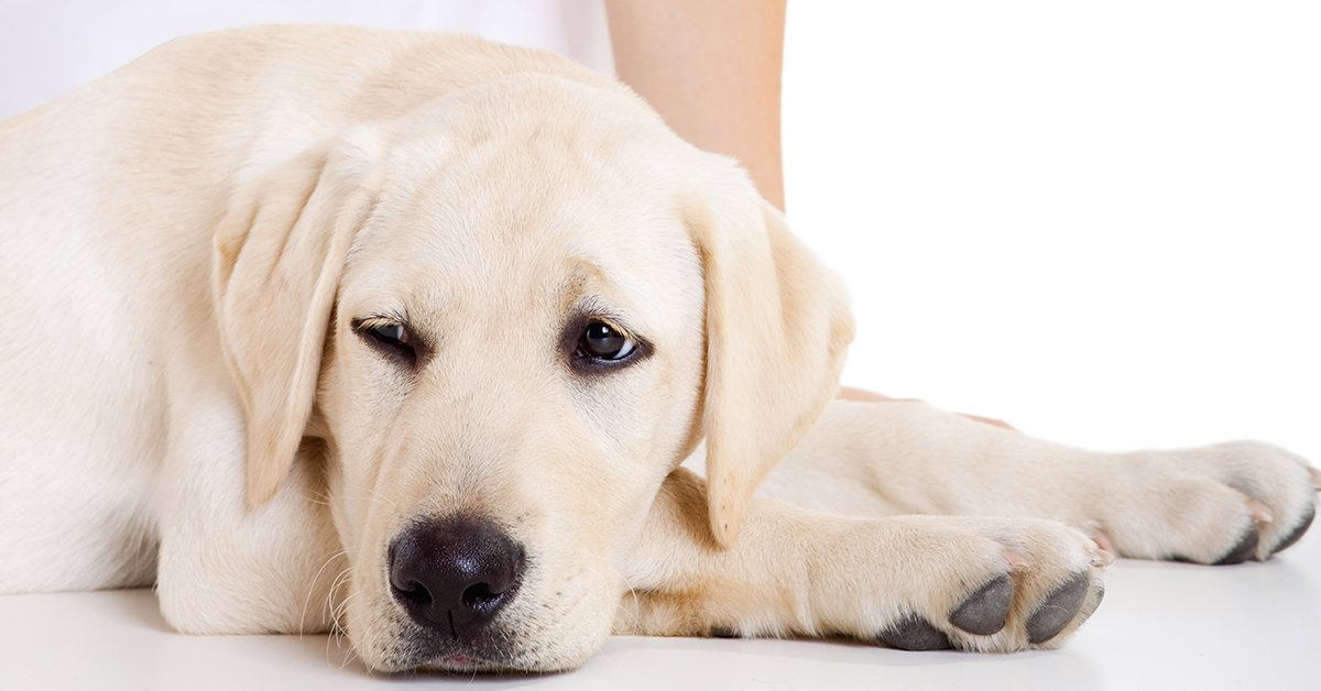 piometra nel cane